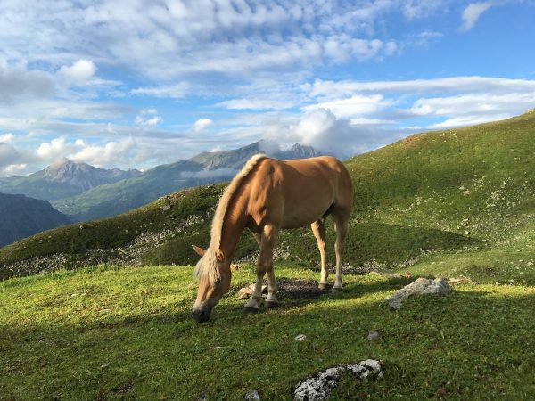 🐴😍🐴 🌜 #Mondscheinamarlberg #Mondschein #stubenamarlberg #kaltenberghütte #visitvorarlberg #visitvorarlberg❤️ #lovevorarlberg #austrianalps #mountainlover #mountainlive #mountainmemories ...