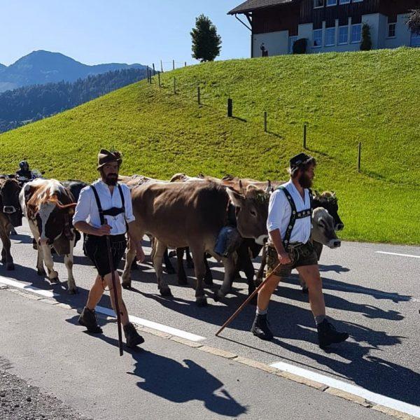 Herbst 🍂... Zeit der Alpabtriebe 🐄👩🌾🚜 Die Bauernfamilien kehren mit ihren Tieren zurück auf ihre Höfe im...