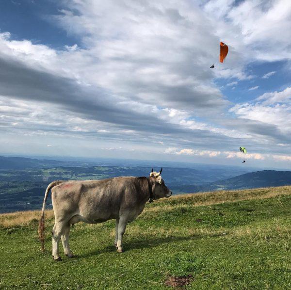Wo selbst Kühe staunen #austria #vorarlberg #bregenzerwald #niedere #faqbregenzerwald #faqfestival #cows #paragliding #naturephotography ...