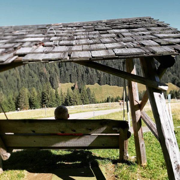 Der Alpsommer 2020 geht langsam zu Ende. #alpehochwies #bergsommer #alpsommer #allgäu #bregenzerwald #venividivorarlberg #enzian