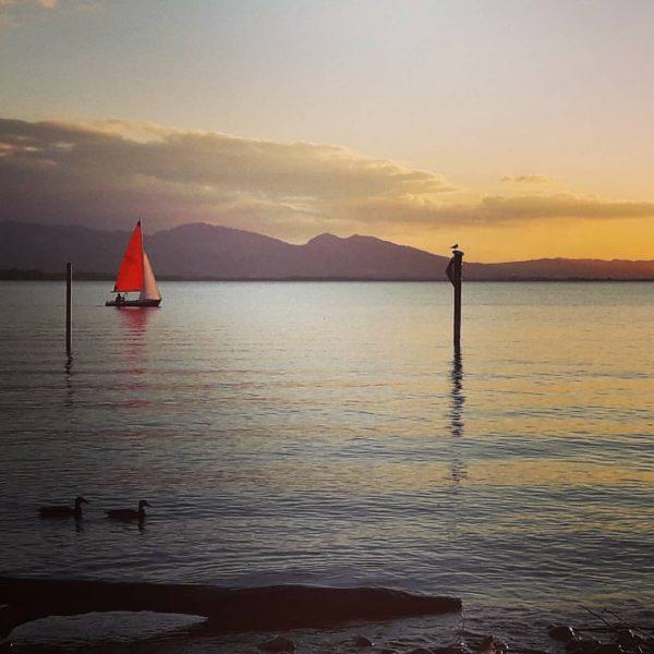 i am sailing, i am sailung ⛵ #iamsailing #spätsommer #bodenseeliebe #lakeofconstance #visitvorarlberg #hobbyfotografie ...