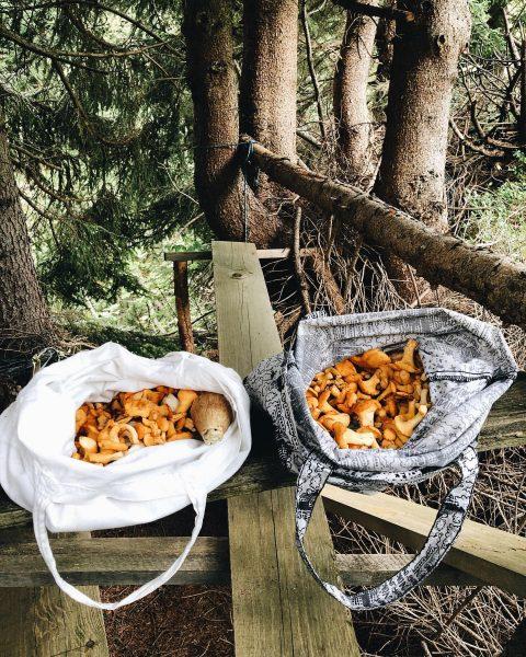 mushroom time = favourite time ❣️ Zug, Vorarlberg, Austria