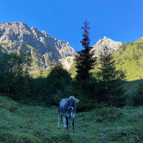 Traumtour um den Widderstein #kleinwalsertal #wanderlust #bergliebe #mountainlovers #bärgunthütte #hikingwithdogs #visitaustria #visitallgäu #oberstdorf ...