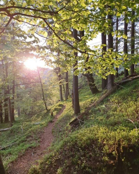 Erkunden Sie die wunderbare Natur im Bregenzerwald 🐛🌲 Die weite Natur mit viel ...