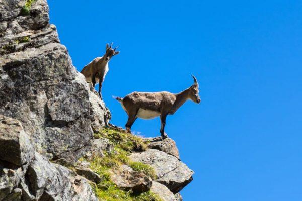 What curiosity looks like in the mountains #vorarlberg #visitvorarlberg #venividivorarlberg #silvretta #lake #silvrettastausee ...