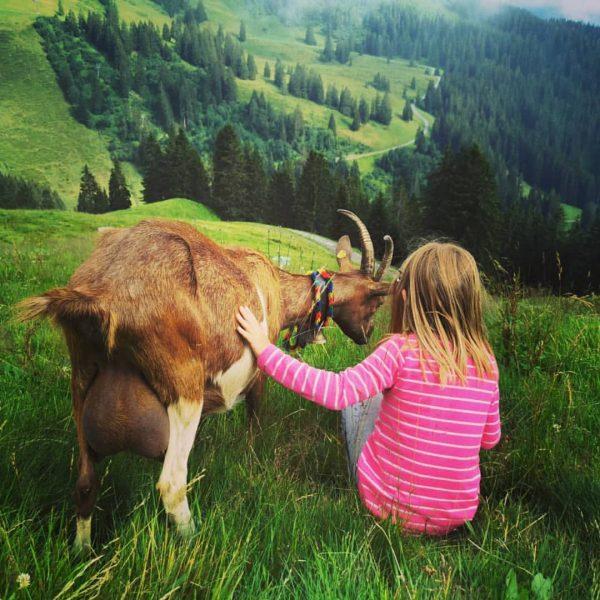 Auf Tuchfühlung #Österreich #Vorarlberg #schoppernau #alpe #ziege #goat #berge #wandern #travelwithkids #reisenmitkind #natur Schoppernau