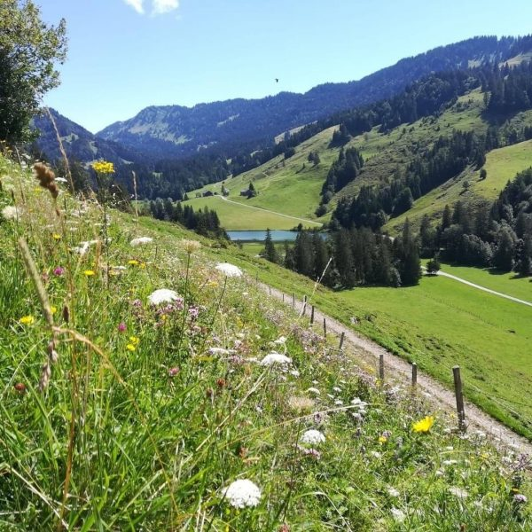Genusswanderung durch den Naturpark Nagelfluhkette in Hittisau. 18. September 2020 - Start um ...