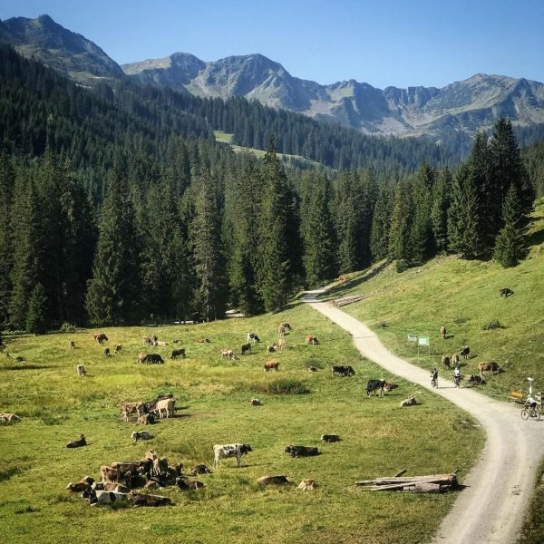 🐮🐮🐮🐮🐮🐮🐮🐮🐮🐮 #kleinwalsertal #bannholzhof #urlaubinösterreich🇦🇹 #instatravel #dogonholiday🐶 #kuhliebe #ferienaufdembauernhof #österreich🇦🇹 #austria #mountenlove #melköde Alpe Melköde