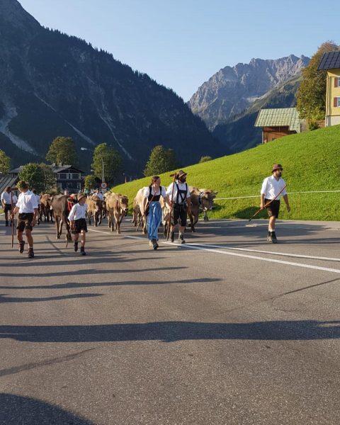 Im kleinen Kreis sind die Kühe am Wochenende wieder im trauten Tal angekommen🥰🥰 #almabtrieb #almabtrieb2020 #kleinwalsertal #vorarlberg...