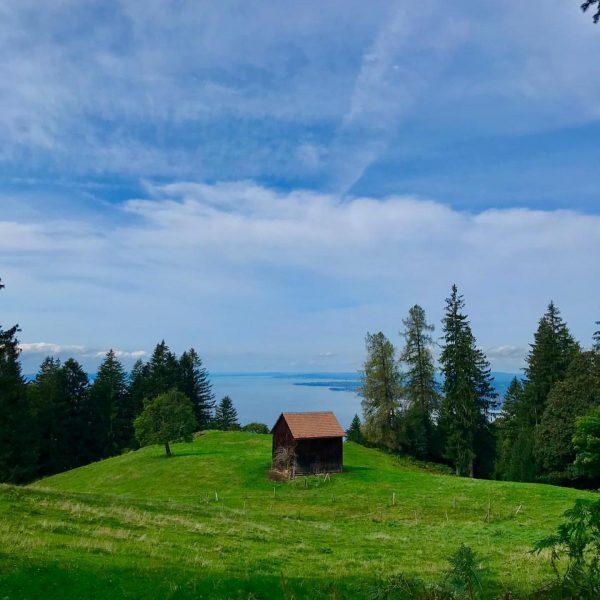 Wanderung mit Ausblick @bodenseevorarlberg @visitvorarlberg @marke_vorarlberg @feel.austria @visitbregenz #hotelamseehard #bregenz #pfänder #urlaubinösterreich #venividivorarlberg ...