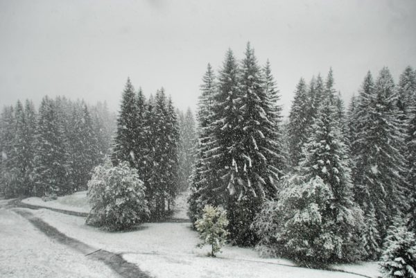 #ersterschnee Und plötzlich sieht die Welt ganz anders aus. ❄️🛷🎿 #damüls #faschina #venividivorarlberg ...