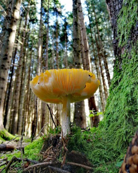 Herbst... #waldliebe #wald #bregenzerwald #vorarlberg #visitvorarlberg #visitbregenzerwald #home #zuhause #pilz #forrest #beautifulnature #naturephotography ...