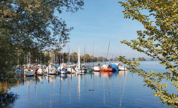 Autumn sun in Hard 🌞🍂. Worauf freust du dich im Herbst? #autumnvibes🍁 #hardambodensee ...