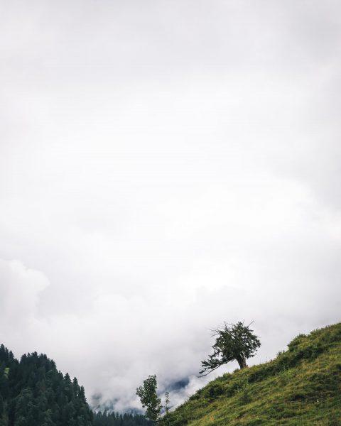 ☁️ 🌳 Schönenbach Alp, Vorarlberg, Austria