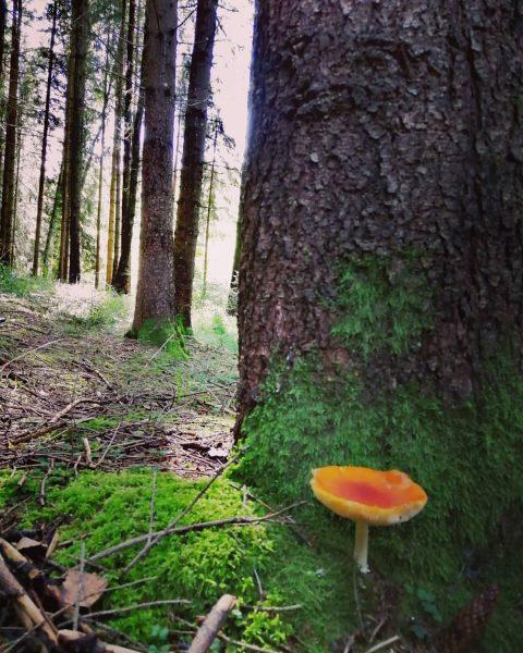 #waldliebe #wald #forrest #pilz #nature #naturephotography #beautifulnature #bestplacestogo #ruhe #zuhause Bregenzerwald