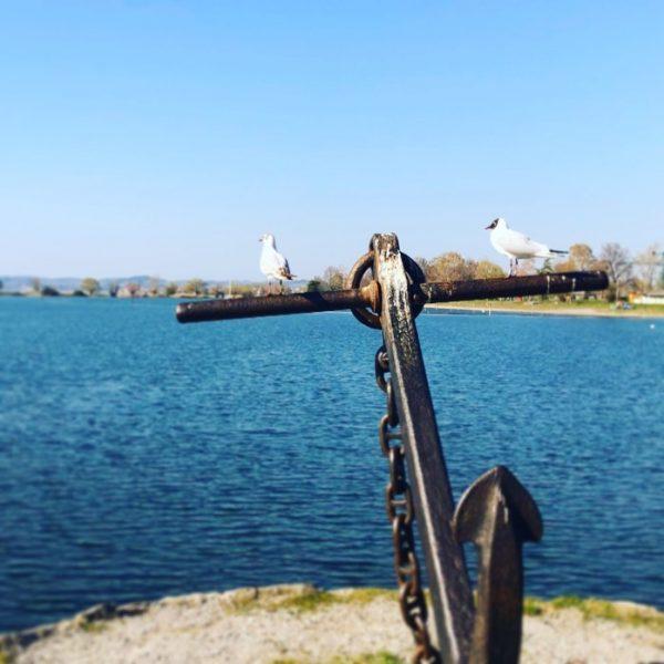 ☀️Hard am Bodensee 🎬 @vorarlberg_at 👉🏼 bitte kommentieren ❤️ . . . #vorarlberg ...