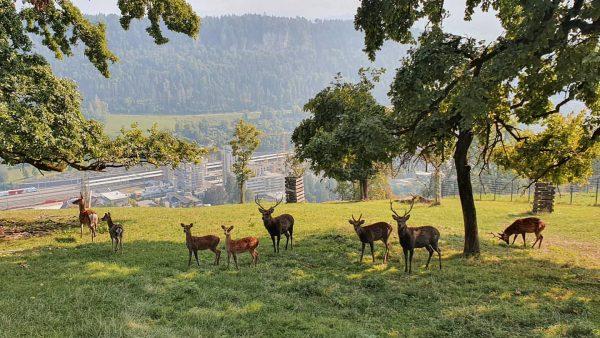 Über 140 Tiere, 21 Tierarten, Wölfe, Füchse, Rehe, Luchse, Waschbären und viele mehr ...