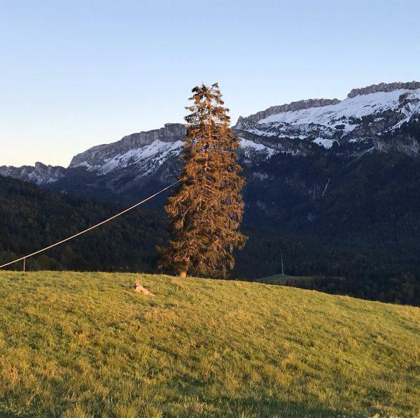 Erweiterte Georunde in Sibratsgfäll gelaufen. Absolut empfehlenswert #sibratsgfäll #kraehenberg #amrandederwildnis #visitvorarlberg #visitbregenzerwald #minweag ...