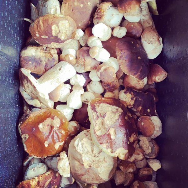 Doch nicht nur Giftige hier #herbstliebe #pilzesammeln #pilzzeit #steinpilze #austria🇦🇹 #lechamarlberg #lechzuers #foodporn ...