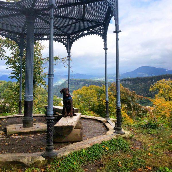 Make today great! #austria #vorarlberg #feldkirch #blasenberg #lebenmithund #lab #dog #retriever #mountains #overthehills ...