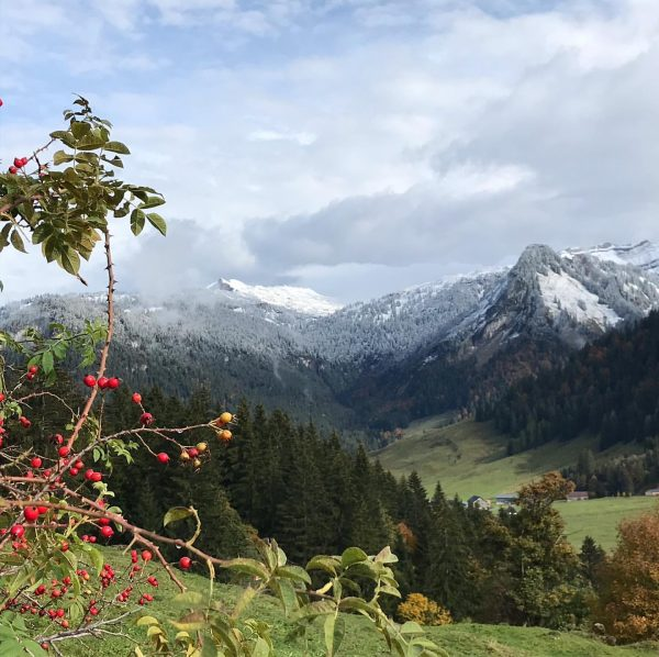 Herbststimmung🍂mit angezuckerten Bergen 🏔 Schönenbach Alp, Vorarlberg, Austria