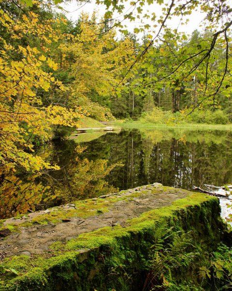 Herbstzeit am Bödelesee🍂: Im Wasser des Moorsees spiegeln sich die bunten Bäume und die auf dem Wasser...