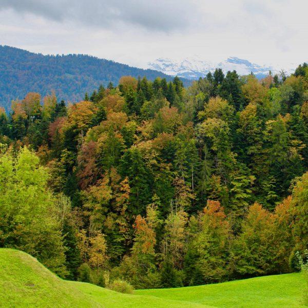 Die Wiesen so grün 🌱, das Laub so bunt 🍁, die Luft so rein 😌, die ersten...