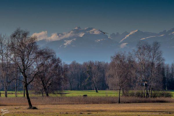 Aufgenommen am 4.10.2020 in Hard Vorarlberg © Fotograf: Thomas Gutschi #bregenz #bregenzerwald #hard ...