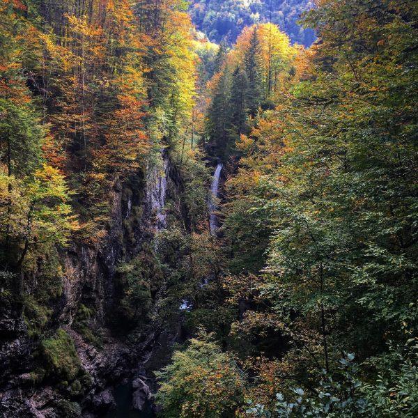 Rappenlochschlucht - Bei Dornbirn im Vorarlberg. Herbstfarben lässt die Bäume glänzen. #rappenlochschlucht #rappenloch ...