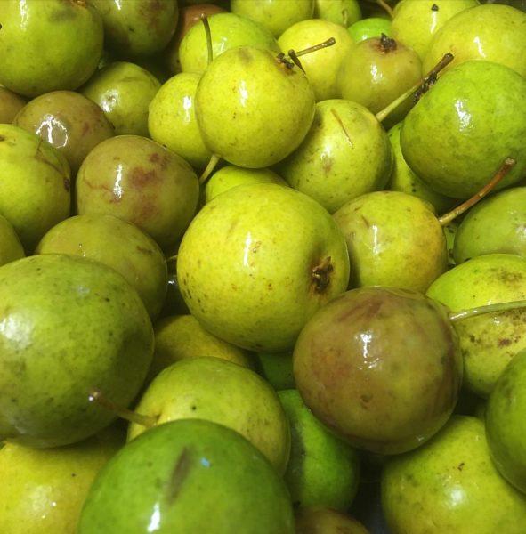 Einmaischen von perfektem, vollreifem Obst. Bald geht es wieder los. #m303 #edelbrand #obstbrand ...