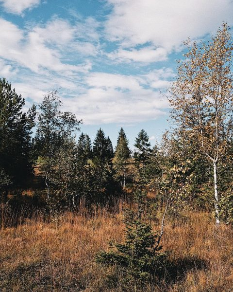 Autumn wonderland 🍁🍂 im Bregenzerwald #wanderherbst #visitbregenzerwald #visitvorarlberg #schwarzenberg #hirschenschwarzenberg #hiking #wanderurlaub #wandern #bregenzerwald #autumn #herbstliebe Schwarzenberg...