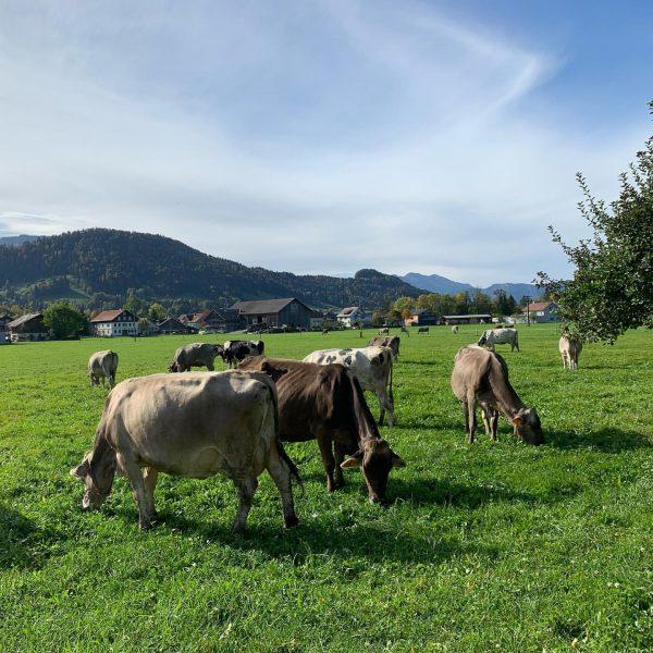 """""""Von den Höfen unserer Heumilchbauern"""" ➡️ Herbst in Hittisau. Gerade die kühleren Temperaturen ..."""