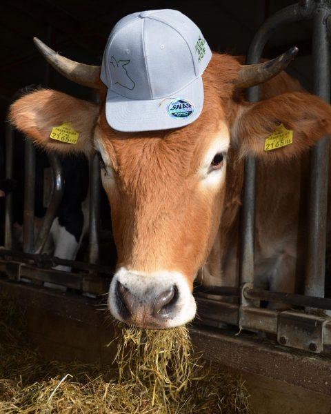 Haben wir nicht coole Rinder? 🐄🐄🐄 Steht ihr doch gut oder was meint ...