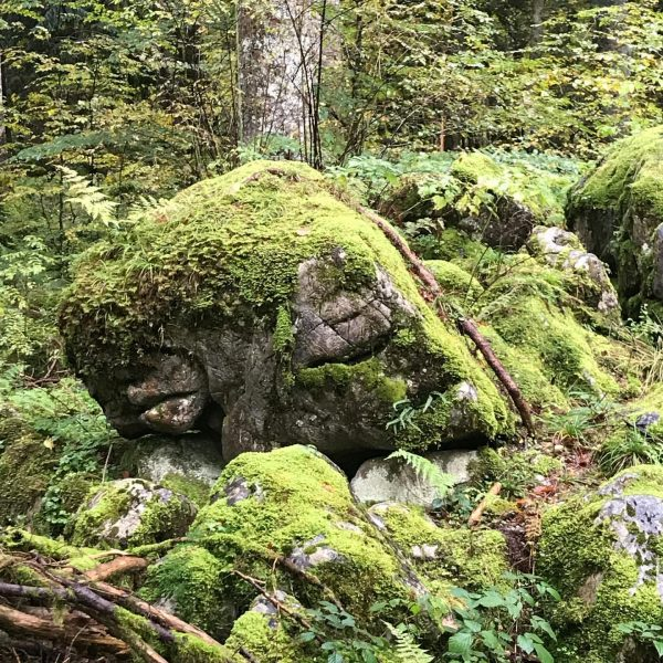 Herbstzeit - Wanderzeit - frische Luft - Gedanken freien Lauf lassen - guten ...