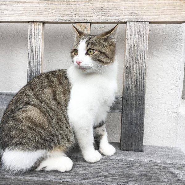 Cute kitty cat 🐱 @hotelhirschenschwarzenberg . . . . #hotelhirschenschwarzenberg #hotelhirschen #kitty #kittycat #cat #bregenzerwald #cutie #cute