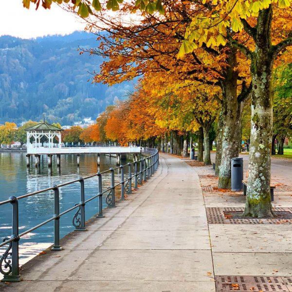 #fall #autumnleaves🍂 #autumn #beautyofnature #lakeconstance #bregenz #colorsoffall #sweaterweather