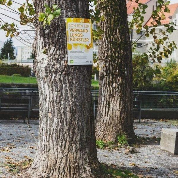 Stadtbäume sind... ... Verwandlungskünstler ... Wohngemeinschaften ... Klimaanlagen ... Staubsauger Warum? Erfahrt ihr ...