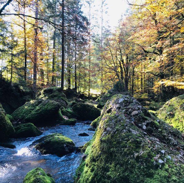 Wunderschöne Tour durch #gunzenried über #lecknersee an der Leckner Ach entlang nach #hittisau ...