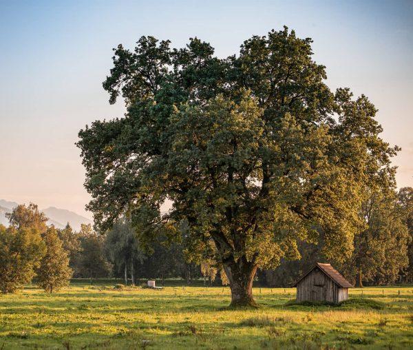 Das Lauteracher Ried - ein wunderschönes, naturgeschütztes Gebiet zum Spazieren, Rad fahren oder einfach nur, um die...
