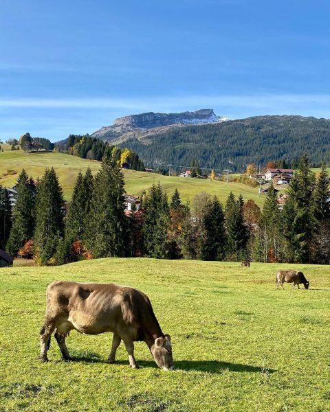 Die letzten sonnigen Herbsttage genießen... ☀️ 🏔 #Kleinwalsertal#Riezlern#Berge#Herbst#Alpenliebe#Bergliebe#wandern#Wanderlust#wandernmachtglücklich#UrlaubindenBergen#glücklicheKühe#sonnigerHerbsttag#Ifen Riezlern Kleinwalsertal