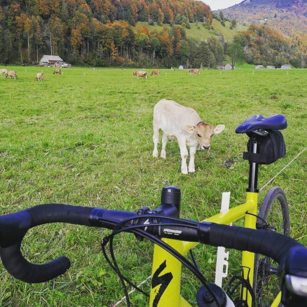 Enjoying fall as well? 🍁 . . #rideinnature #getoutandride 🚴 #rideforfun #roadbikeride #autumncolors ...
