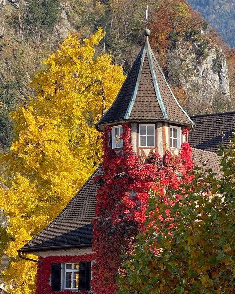 #farbendesherbstes #herbst #farben #farbspiel #autumn #wilderwein #ginko #ahorn #rathaus #marilonghi #hohenems Hohenems, Vorarlberg