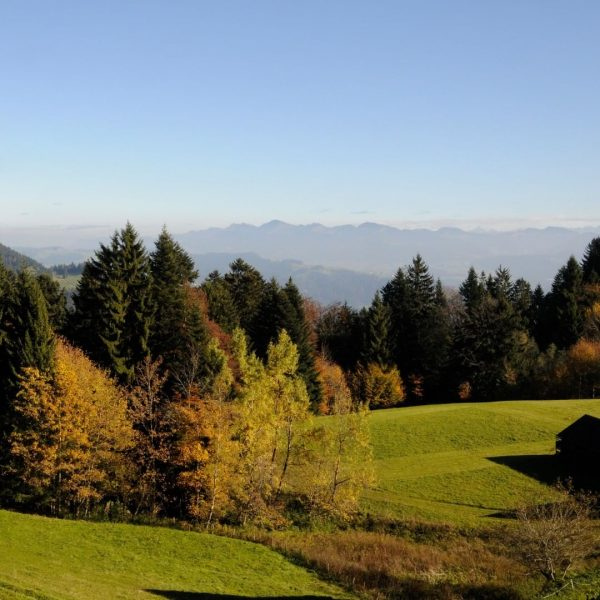 Panorama hike on the top of the Pfänder to Eichenberg @bodenseevorarlberg. This weekend is the last chance...