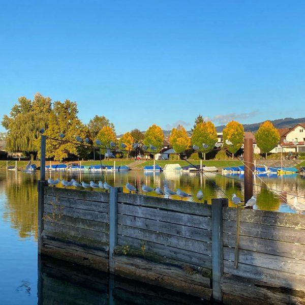 #bodensee #bodenseepage #lakeconstance #bodenseeregion #lake #autumn #herbst #colors #farben #vorarlberg Vorarlberg