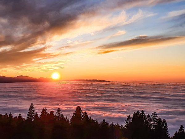 Wonderful sunset above the fog @lakeconstance #bergzeit #prilaga #handyfoto #naturegram #lakelife #bergliebe #sunsetlovers #ig_sunsetshots #mountainvibes #handyfotografie #nature_shooters...