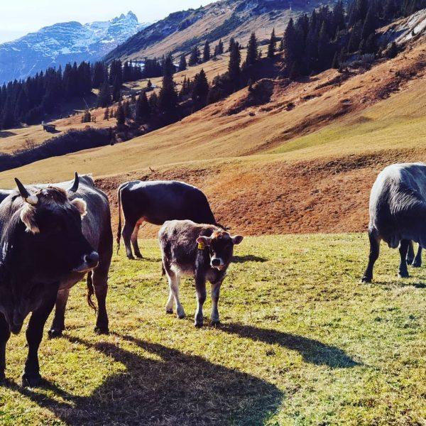 #grillen #oberlech #muxelhof #lechzuers Lech, Vorarlberg, Austria
