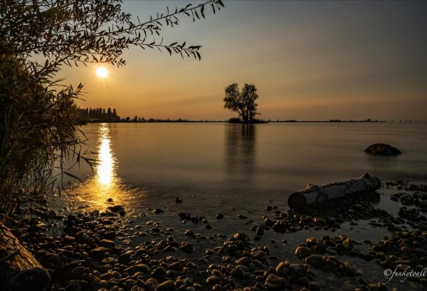 Sunset at the Lake The nature reserve Rheindelta in Vorarlberg (Austria) is the ...