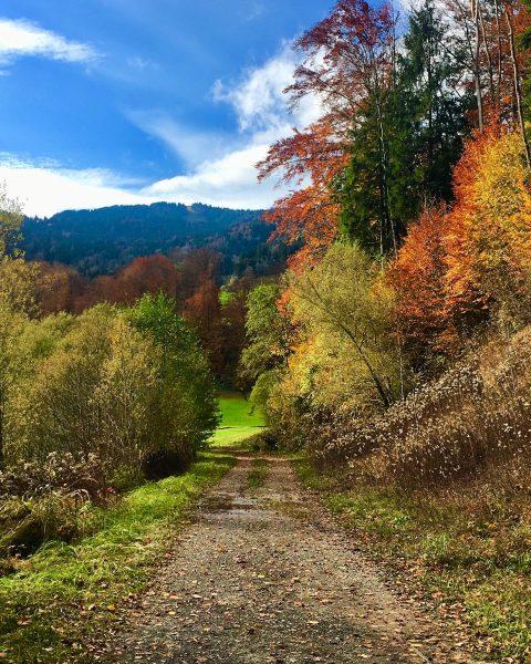 Die vielen bunten und sonnigen Herbstmomente waren wunderschön – findet ihr nicht auch? ...
