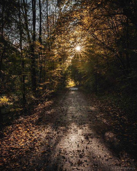 Was gibts schöneres als ein Spaziergang durch den Wald bei Sonnenschein? Ich lieb so eine Lichtstimmung einfach...