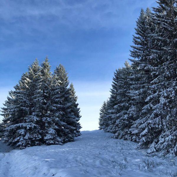 Sonne ☀️ Schnee ❄️ frische Luft 🌬 Ruhe 😎schöner Mann 💁♂️ Wochenende 😎 ...